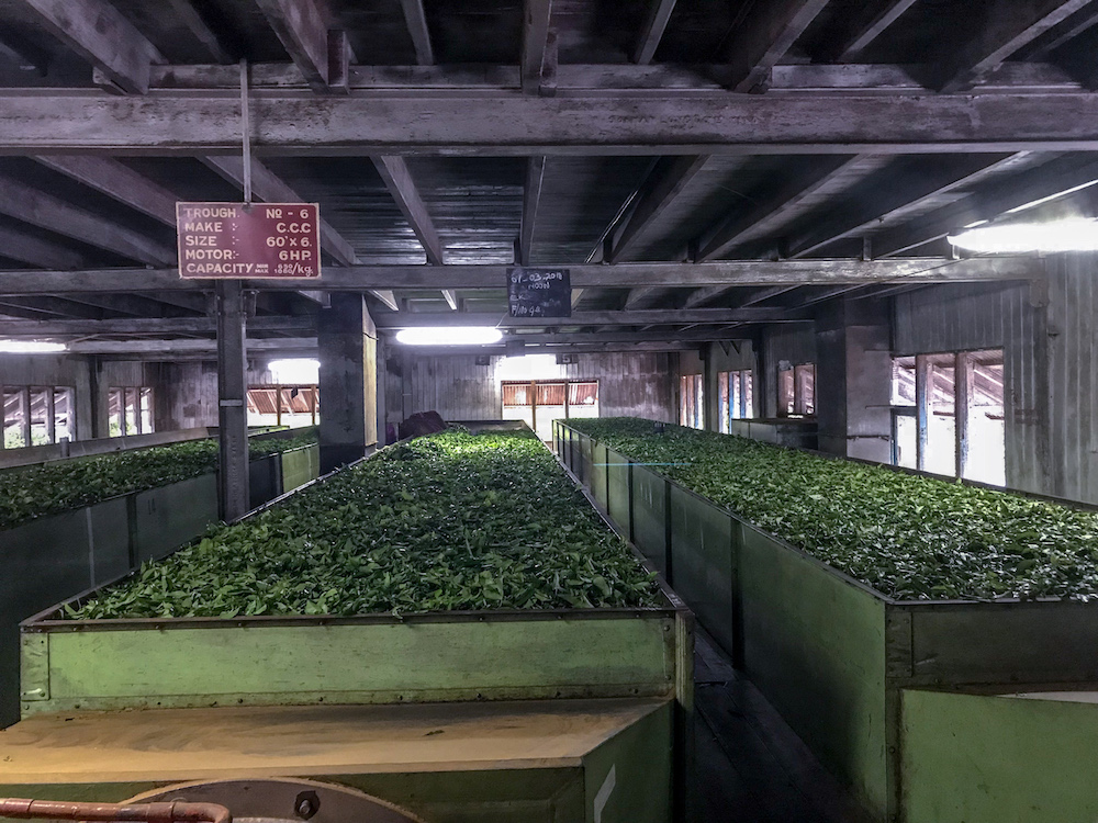 Tea manufacturers report significant savings and efficiencies thanks to Optidrive Eco VFD